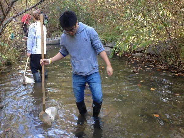 Junior Danny Song collects macroinvertebrates during a Group 4 field-trip at Snakeden Branch.