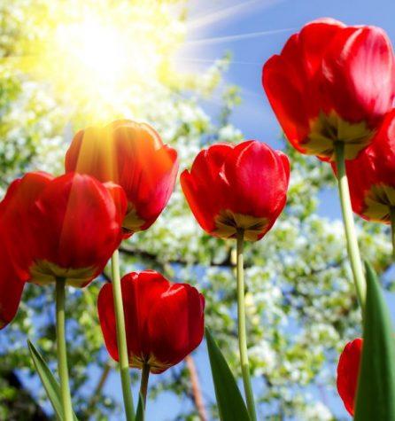 Outdoor Activities for Spring