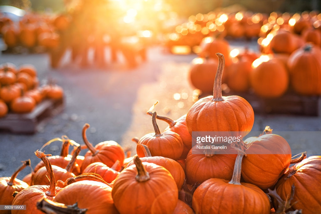 A pile of bright orange pumpkins on a pumpkin patch basking in sunlight, photo courtesy of Natalia Ganelin on Getty Images