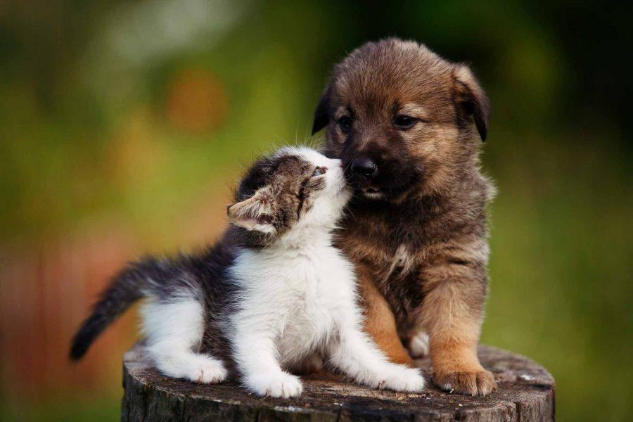 Image+via+Bayside+Animal+Hospital