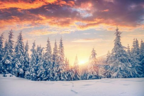 18 ways to get into the holiday spirit (quarantine edition)