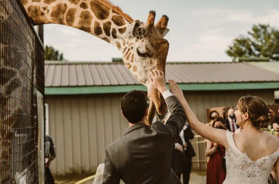Remembering Waffles the giraffe - Reston Zoo devastated by fire